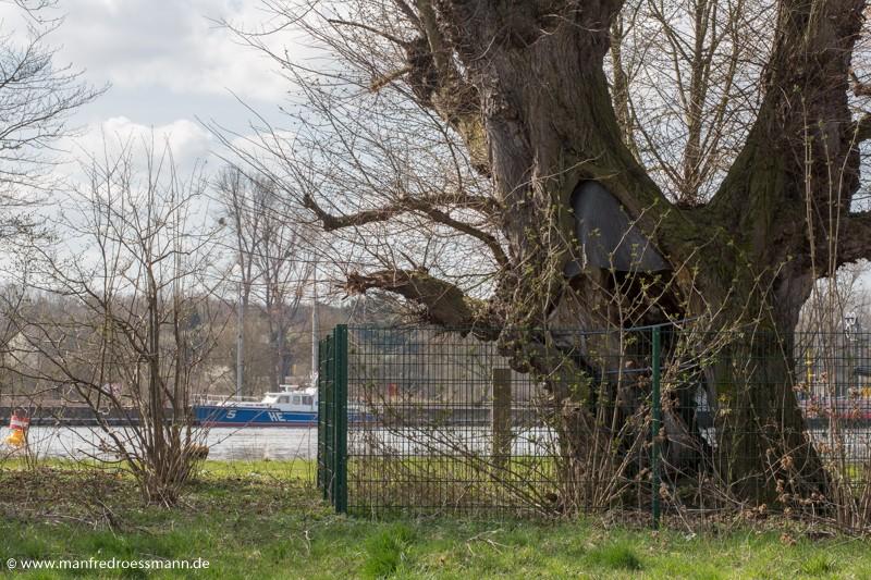 bedeutende Bäume in Hessen
