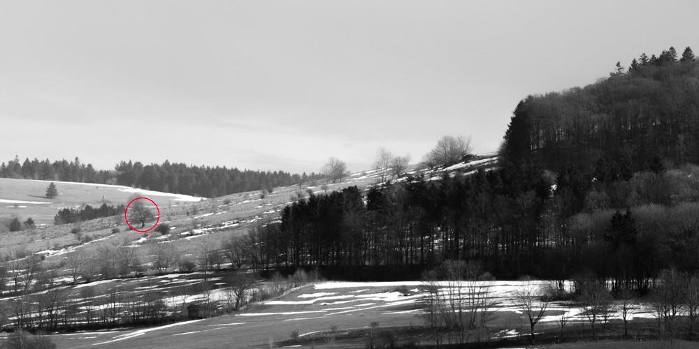 Hutebuche am Steinkopf