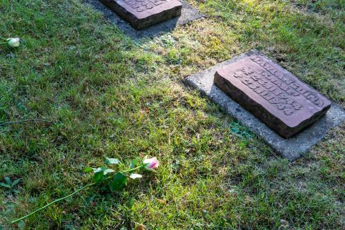 Rose am Kindergrab
