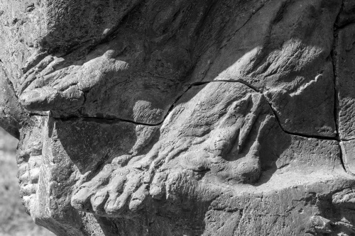 Eberhard Linke, Roemisches Mauerfossil-2