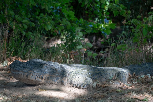 Klaus Pfeifer, Alligator