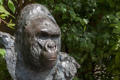 Gorilla Matze-2