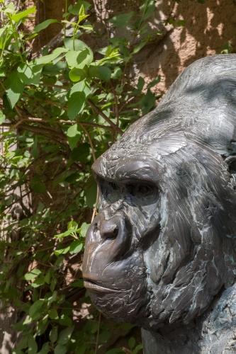 Gorilla Matze