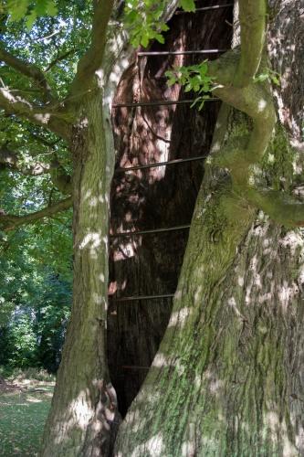 Aelteste Eiche im Jenischpark
