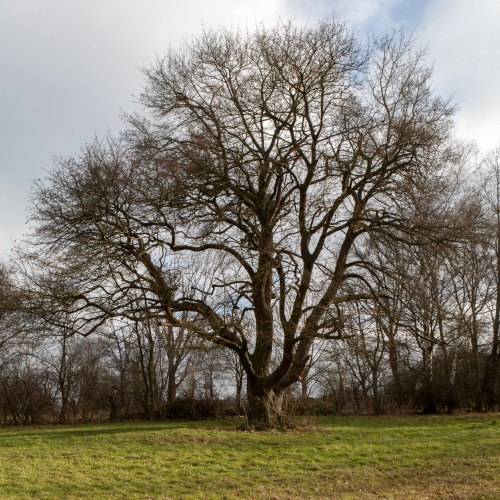 Feldahorn bei Amoeneburg-2