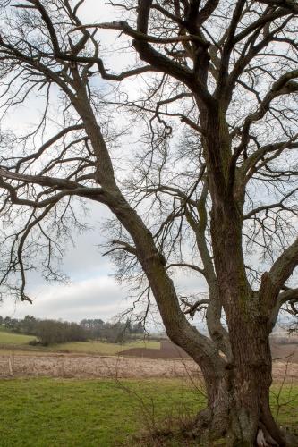 Feldahorn bei Amoeneburg