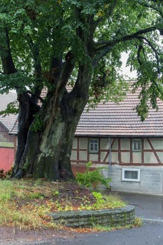 Dorflinde in Harbach-2