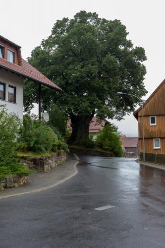 Dorflinde in Harbach-3