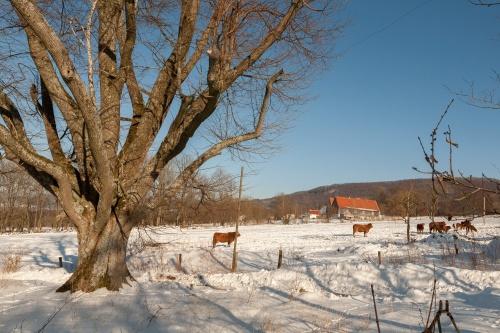 Reste Lindenallee Baum 1-3