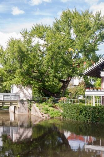 Goethe-Ginkgo und Petrihaus