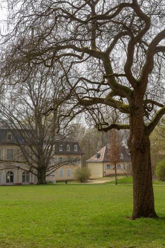 Trompetenbaum in der Ehemalige Kuranlage Wilhelmsbad-2