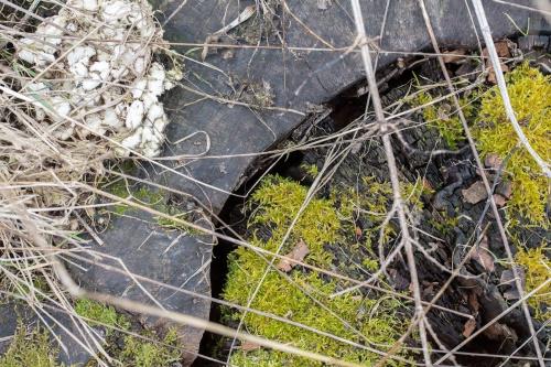 Rand der Stammscheibe mit Pilzen