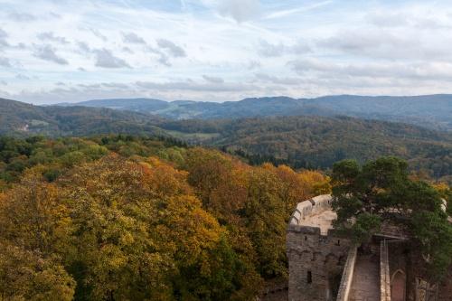 Kiefer auf dem Auerbacher Schloss - Fernsicht