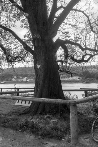 Rosskastanie 1 in Kornsand am Rhein
