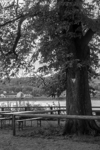 Rosskastanie 2 in Kornsand am Rhein