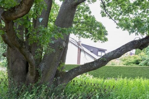 Sechstaemmige Eiche in Heusenstamm-5