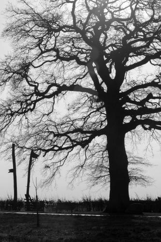 Lausbaum an der Hohen Strasse-3