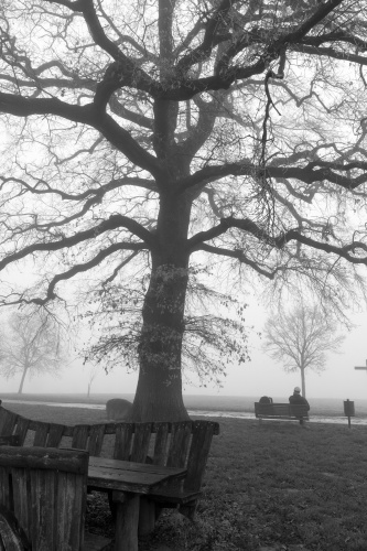 Lausbaum an der Hohen Strasse - Rastplatz