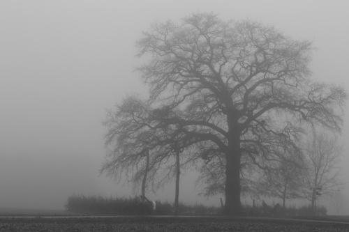 Lausbaum an der Hohen Strasse in Kilianstaedten Habitus