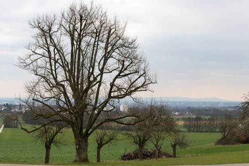 Speierling in Kelkheim Panorama