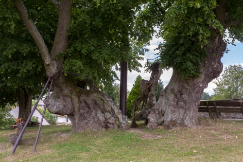 1000-jaehrige Linde in Reinborn