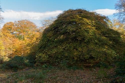 Krueppelbuchen - Kuppel von aussen
