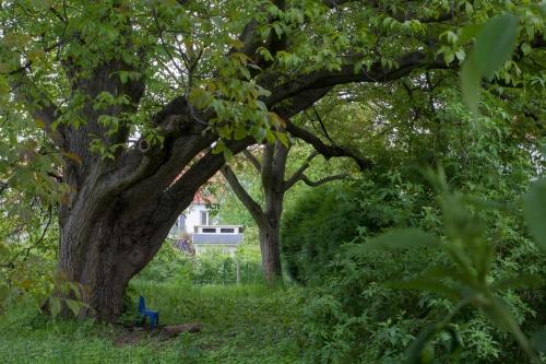 2010 05 17 Mainz Nussbaum