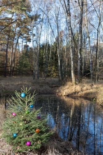 Heidnischer Brauch am Teich im Wald