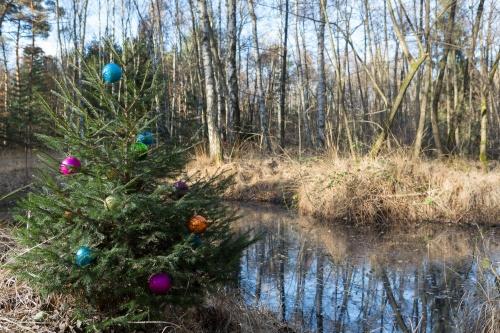 Heidnischer Brauch im Offenbacher Wald