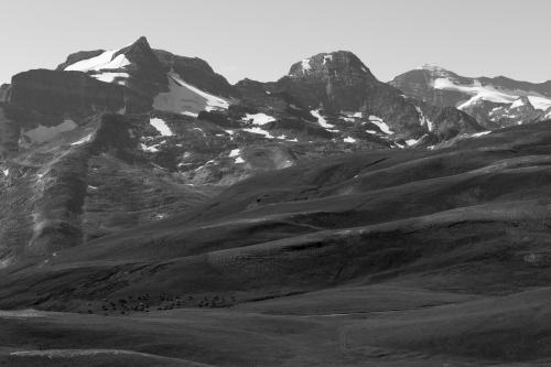 Rinder der Furggerchaeller-Alpe