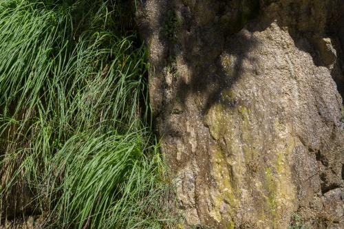 Gras - Fels - Wasser