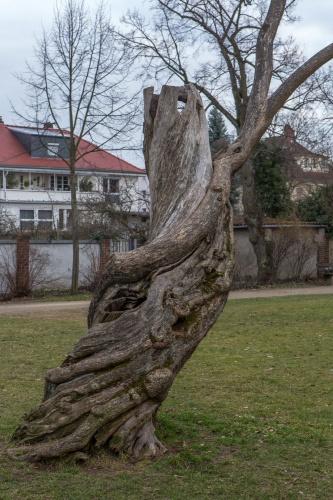 Albert-Schweitzer-Anlage