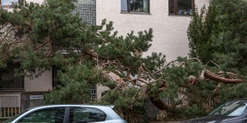Schepp Allee - Schiefe Allee-5
