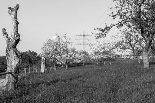 Stromobstwiese