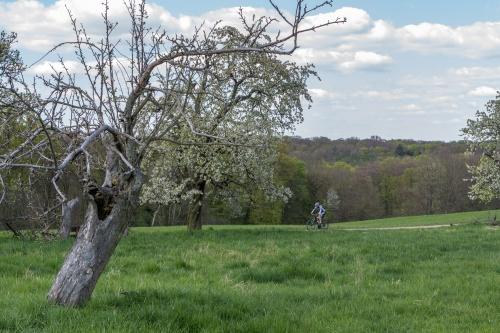 Apfelbaum mit Radfahrer