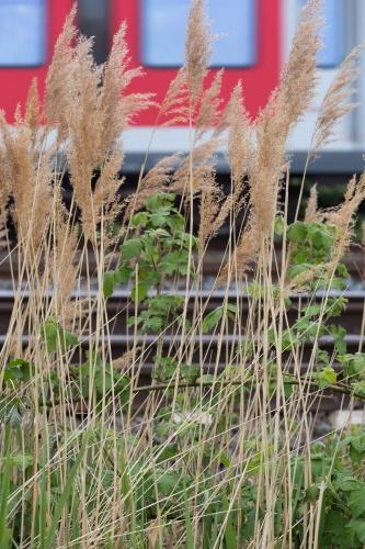 Bahnlinie