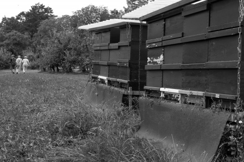 Bienenvoelker