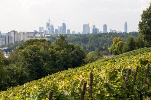 Frankfurter Wein und Skyline