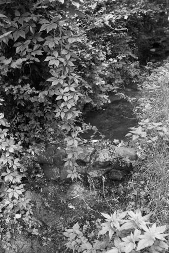 Klingelbach am Quellenwanderweg