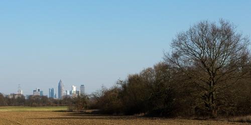 Sossenheimer Feld mit Skyline