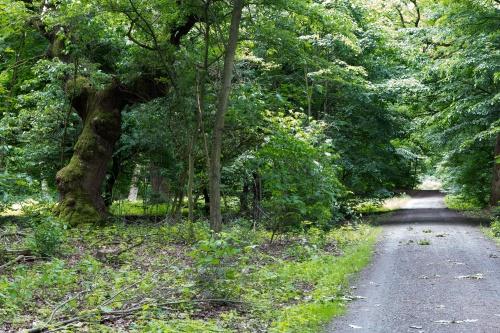 Schwanheimer Wald-10