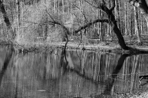 Stadtwald-2