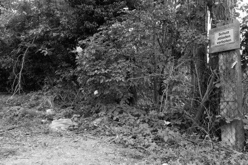 Schwanheimer Wald-12