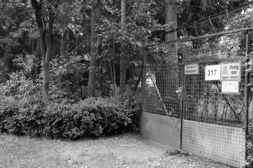 Schwanheimer Wald-13