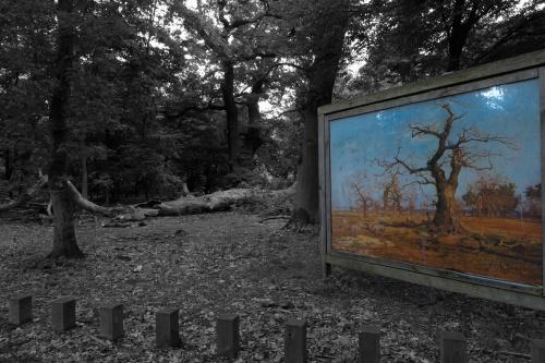 Schwanheimer Wald-4