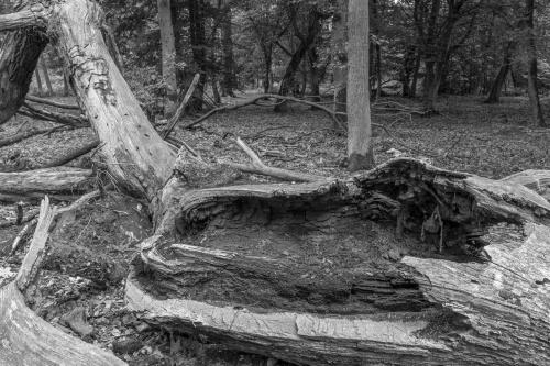 Schwanheimer Wald-5