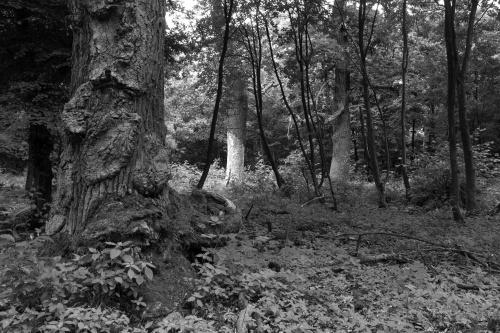 Schwanheimer Wald-6