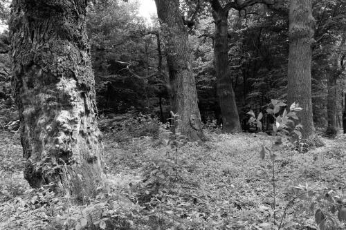 Schwanheimer Wald-8