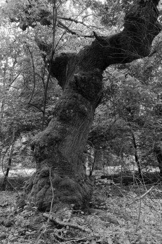 Schwanheimer Wald