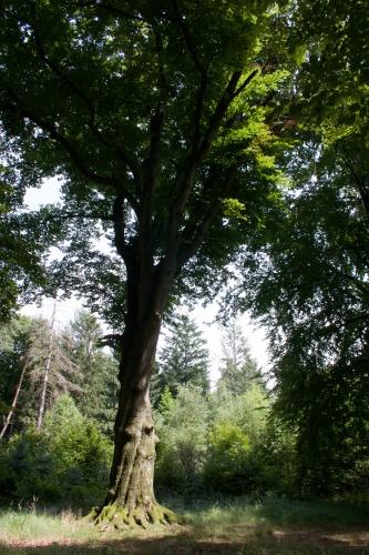 2007 07 08 FotoFahrrad nach Patershausen-2